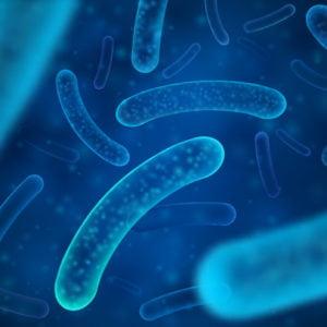 Lactobacillus Paracasei LC11
